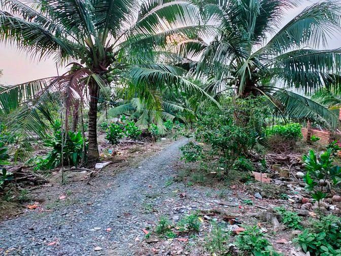 Cần Bán 4000m2 Đất Vườn Long Mỹ Mang Thít Vĩnh Long