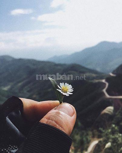 Bình Liêu mùa cỏ lau đẹp mê hồn