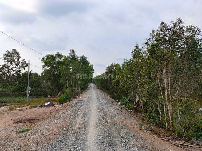 Cần tiền bán gấp lô đất vườn 12.000m2 Tân Phước Tiền Giang