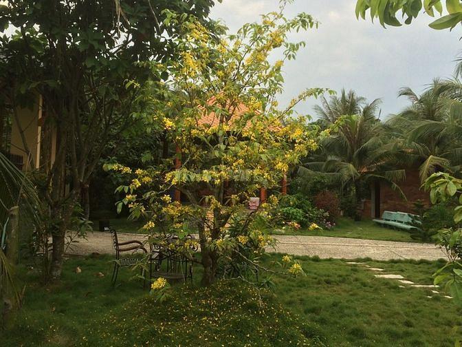 Bán nhà đất vườn cây ăn trái xã Hoà Định Chợ Gạo Tiền Giang