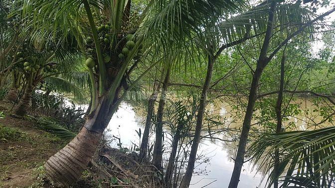 Chính chủ bán 1.7ha MT sông làm Du lịch sinh thái Bến Tre. 800tr/công