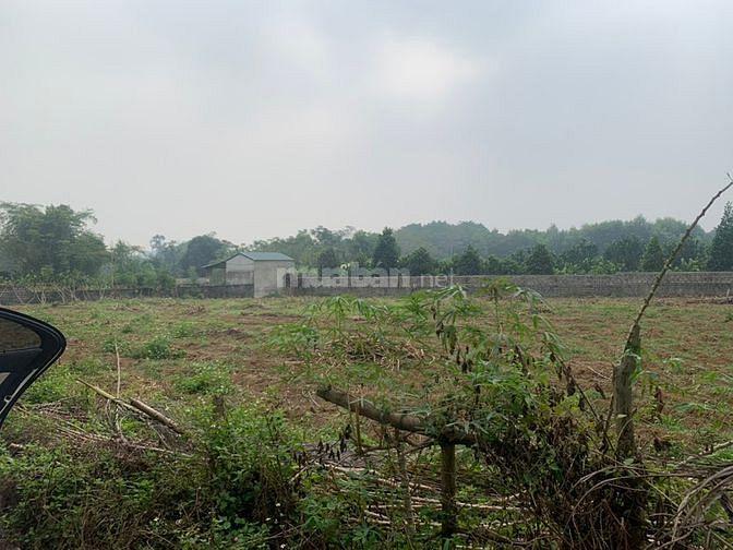 Bán nhà xã Cổ Đông, Thạch Thất, 2000m2 đất, cây trồng lâu năm