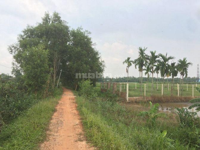 Bán gấp lô đất trống trồng cây 1562m2, nằm ngay đường Cầu Xáng,Hóc Môn